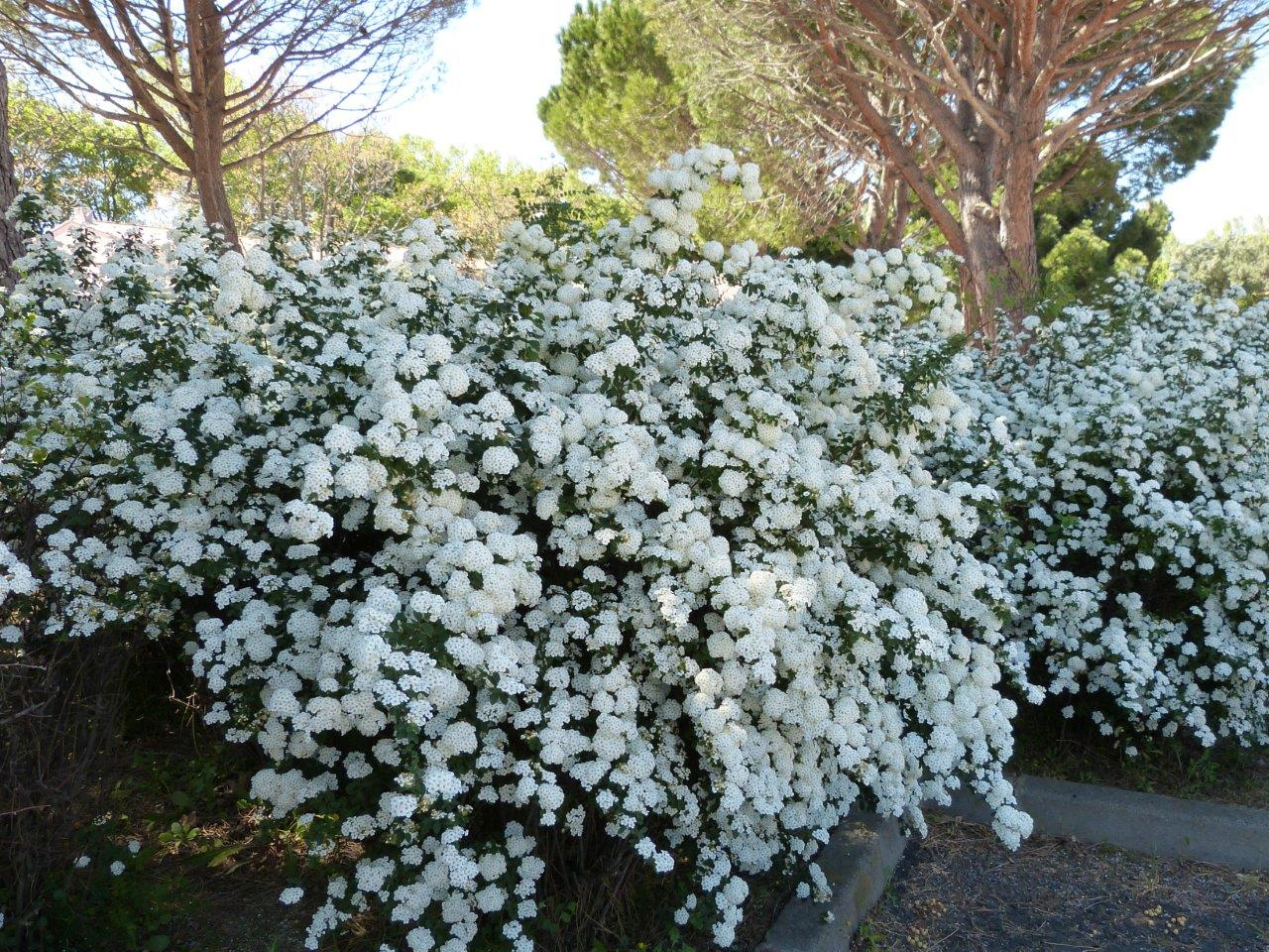 lac fleurs printemps blanches - photo #7